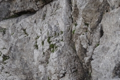 via-meledes-monte-zermula-klettern-06-nachstieg-3SL